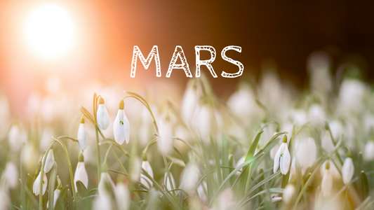 Programme de Mars 2019